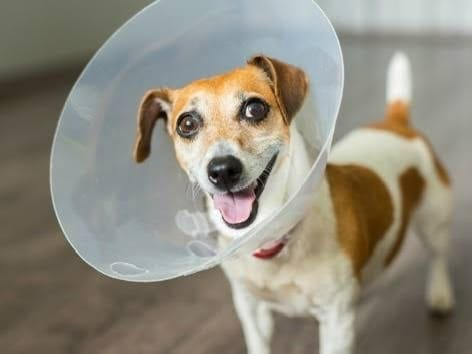 Why do I have to keep the wound dry after my dog's surgery? -