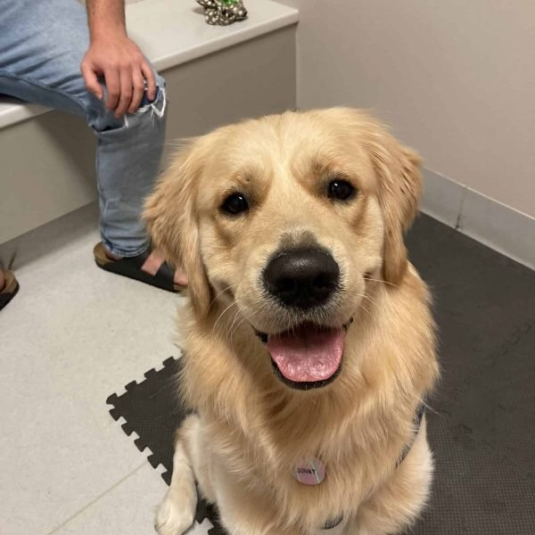 Hip Health For Dogs with New Life Vet